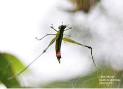 Insectos en el río Paute